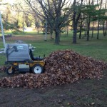 Leaf clean up, lawn care, leaves, fall, spring