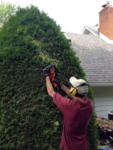 hedge trimming, pruning, property maintenance