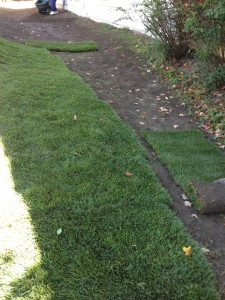 sod, grass, lawn care