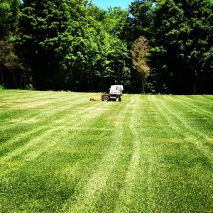 lawn care, grass cutting, mower, mower lines