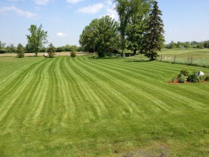 lawn care, grass cutting, property maintenance, lawn mower